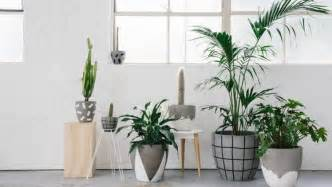 how to decorate with and style indoor plants