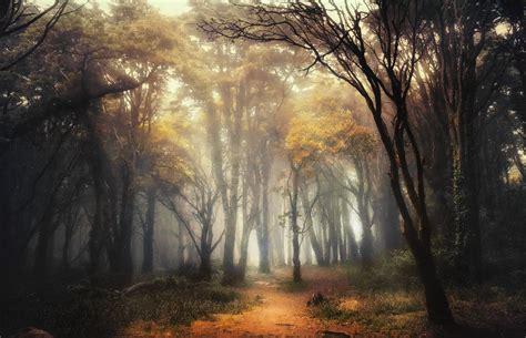 nature landscape forest path mist sunlight shrubs