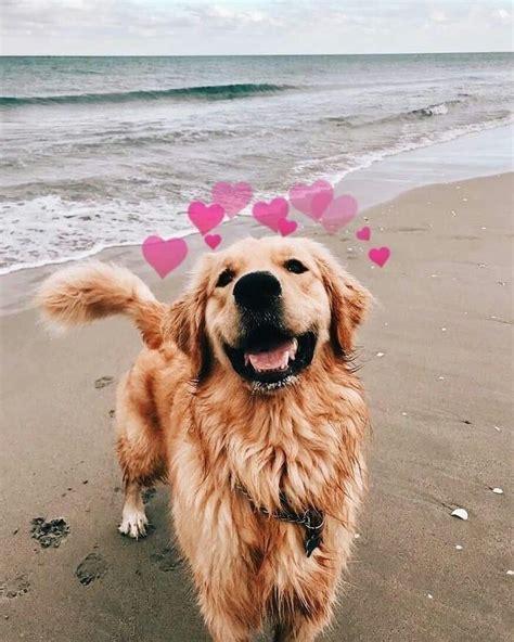 Weitere ideen zu hunde, süße tiere, süße hunde. . süß | Welpe | Hund | Tier | Haustiere | Niedliche hunde, Süßeste haustiere, Niedliche tierbabys