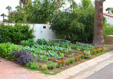 front yard vegetable garden design vegetable gardens in unexpected places ramblings from a desert garden