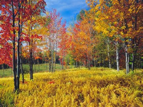 Vermont Fall Foliage 2017 How To Experience The Best Of