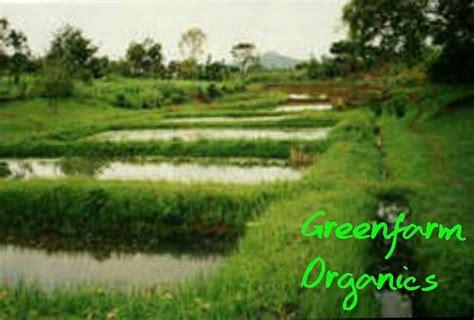 greenfarm organics fish farming  kenya