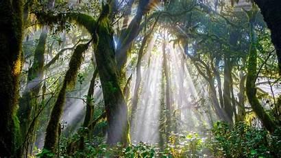 Bing Garajonay Forest National Spain Park Gomera