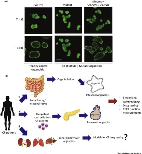 disease modeling  stem cell derived  organoid systems