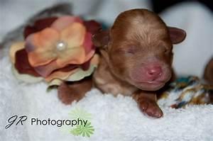 JR Photography: Newborn Puppies