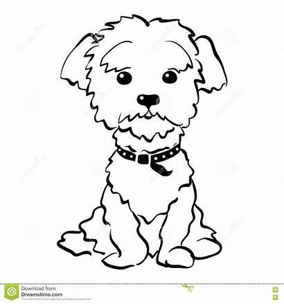 Maltese Cane Hunde Schizzo Seduta Divertente Vettore
