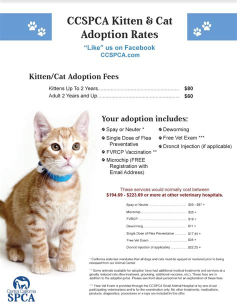 Adoption Rates  Central California Spca, Fresno, Ca. Att Internet Data Usage Holiday Company Cards. Website Domain Hosting Long Beach Ca Colleges. Business Holiday Calendar 2013. Payroll Accounting Articles Dell Data Safe. Little Rock Storage Units Simple App Creator. Best Mba Programs In Michigan. Online Marketing Communication Tools. Limited Liability Companys Data Center Audit