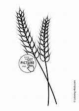 Coloring Wheat Printable Pages Nature Grass Template Rye Fall Ear Farm Sheets 4kids Bread Parts Barley Colouring 1483 Preschool Clip sketch template