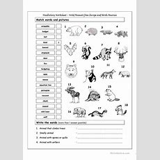 Vocabulary Matching Worksheet  Wild Animals From Europe & North America Worksheet  Free Esl