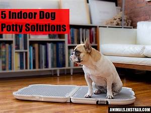 5 indoor dog potty solutions that will free you from the leash for Indoor dog bathroom solutions