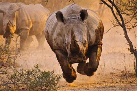 rhino nature animals wallpapers hd desktop  mobile