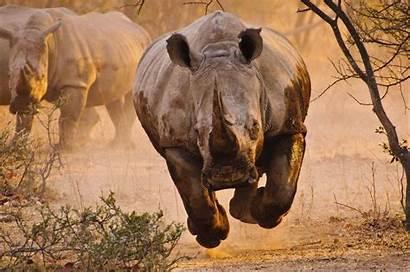 Animals Rhino Nature Wallpapers Desktop 4k Animal