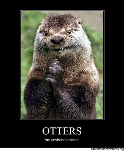 Funny Otter Meme - 97 best images about otters on pinterest how to draw cartoons tribal designs and playstation