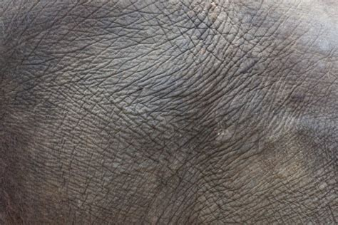 elephant skin texture  stock photo public domain