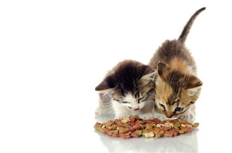 what is the best cat food best cat food for diarrhea 3 worry free complete cat foods tinpaw