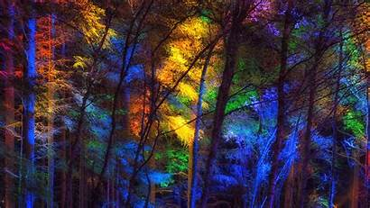Colorful Forest Trees 4k Background Uhd Wallpapers