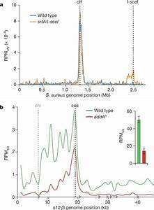 Crispr U2013cas Systems Exploit Viral Dna Injection To