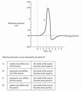 Ib Biology Mock Questions