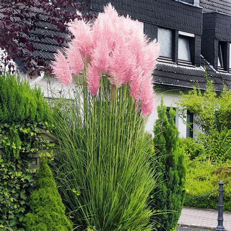 Pflanzen Garten by Rosa Pasgras Kaufen Bei G 228 Rtner P 246 Tschke