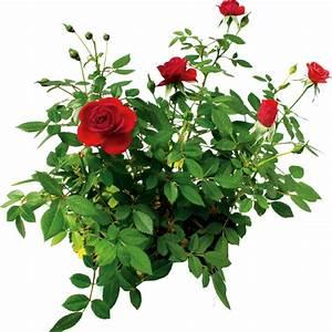 Цветы | Мир цифрового скрапбукинга