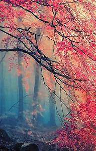 Misty Japanese maple (good for phone background ...
