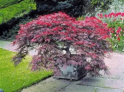 quel arbre de taille pour mon jardin d 233 coration