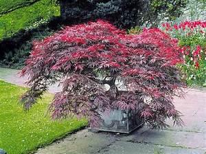Les Plus Beaux Arbres Pour Le Jardin : quel arbre de petite taille pour mon jardin elle ~ Premium-room.com Idées de Décoration