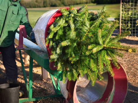 best place to cut your own christmas tree in va best places to cut your own tree in the los angeles area