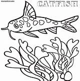 Catfish Coloring Pages sketch template