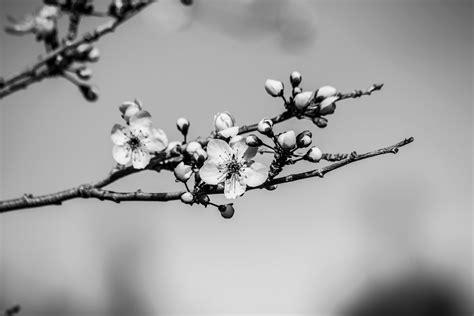 naturetastic blog cherry blossoms wildlife spring