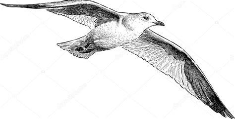 Disegno Gabbiano - gabbiano in volo vettoriali stock 169 alekseimakarov 81278544