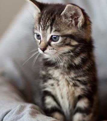 gemalte katzenbilder bilder und sprueche fuer whatsapp und