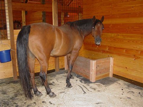 list  synonyms  antonyms   word homemade horse