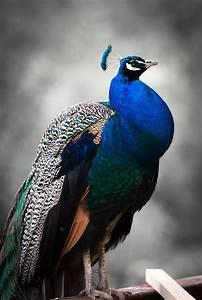 Free stock photo of animal, bird, blue