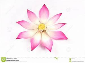 Lotus Petals With Its Bud Stock Photo Image Of Attractive