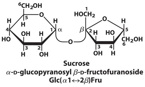 Why Is Sucrose Called Invert Sugar Quora