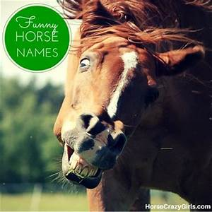 Funny Horse Names