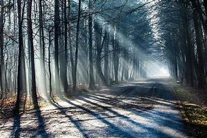 Fototapete Wald Im Lichtstrahl Jetzt Online Bestellen