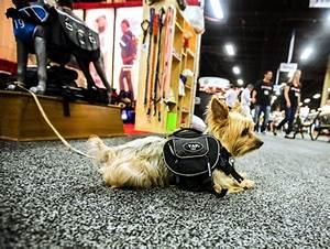 las vegas review journal pets 2018 dodge reviews With dog clothes las vegas