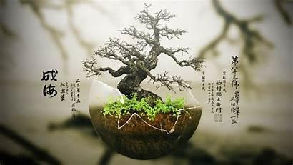 Bonsai Japanese Wallpaperaccess Wallpapers
