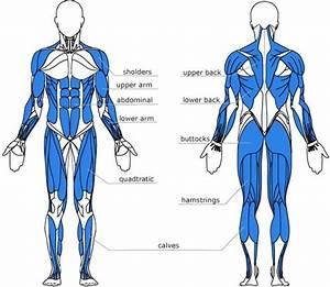 Rowing Machine Muscles Used  Complete Breakdown   U2022 Rowing