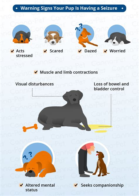 Dog Seizure Symptoms