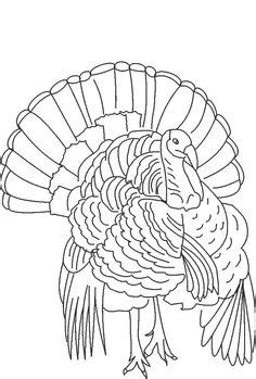 turkey images turkey turkey drawing turkey