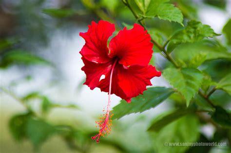 Hd Beautiful Flowers Wallpapers Studiopk