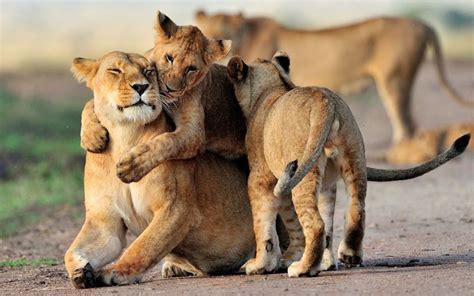 della serie animali  foto animalinelmondo