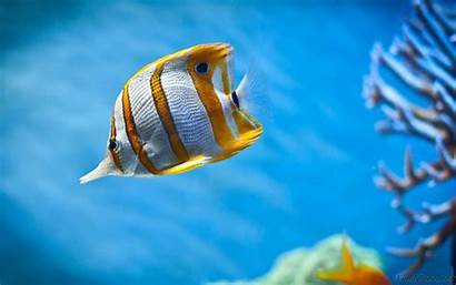 Wallpapers Fishes Desktop Fish