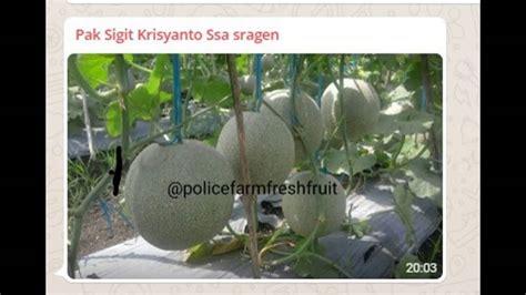 harga pupuk organik cair ssa manggarai