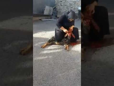 chinese woman killing  goat chinese lady slaughters goat gp mp mp flv indir brave women