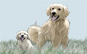 Lion Growth Chart Golden Retriever Growth Sequence In The 1st Year Dogs