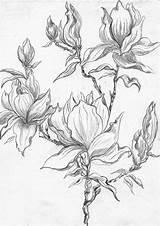 Henny Gcssi sketch template